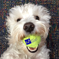 Zeke Playing with a Magnet America Logo Tennis Ball